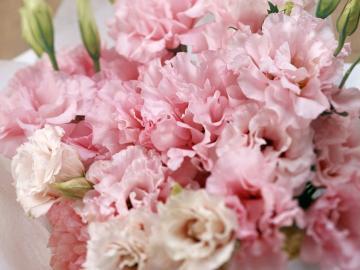 30种鲜花花语,以后送花注意啦