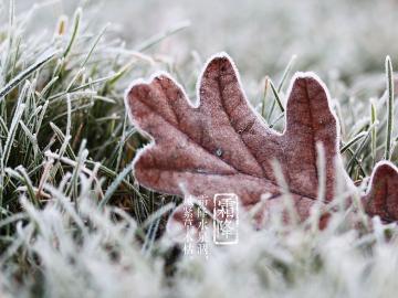 传统节日霜降祝福说说