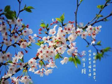 三月第一天说三月你好,早安你好的句子说说
