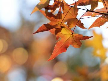 传统节日秋分有趣的短信祝福语