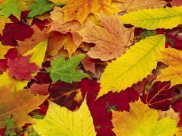 秋分到来的节日说说