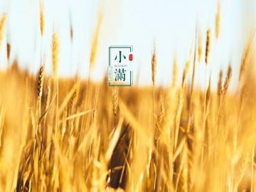 小满最新暖心祝福语 烈日炎炎当空照,小满到来温度高