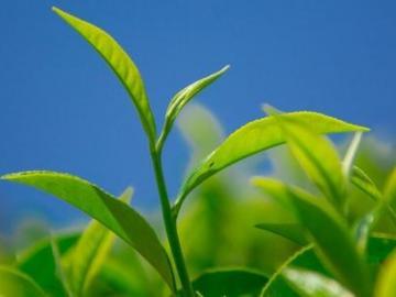 高段位绿茶经典语录  教你一眼识白莲花