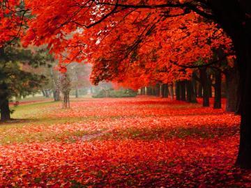 收集有关秋天的句子 温柔且浪漫