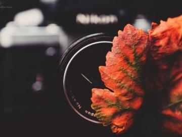 秋分到来的节日说说:跌落的几米阳光,洒在黄叶堆叠的路上