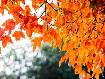跟秋天相关的诗句