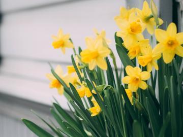 春光明媚的唯美文案文艺说说   樱花满地集于我心,楪舞纷飞祈愿相随