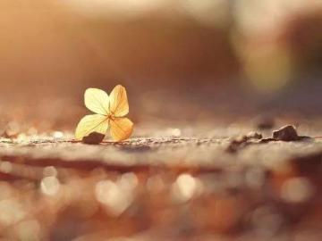 相信一切都会好起来的唯美句子 春天到了,冬天的不甘该通通放下了