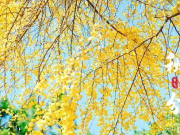 秋分时节最经典的祝福语说说