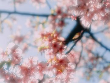 描写春天的最美诗词 试上超然台上看,半壕春水一城花