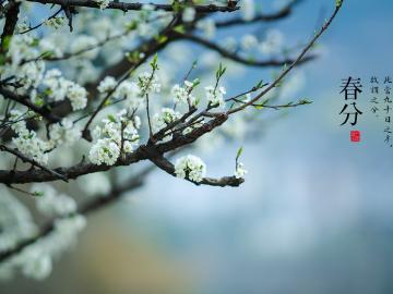 2020春分时节的暖心祝福    春分到了,愿你快乐逍遥