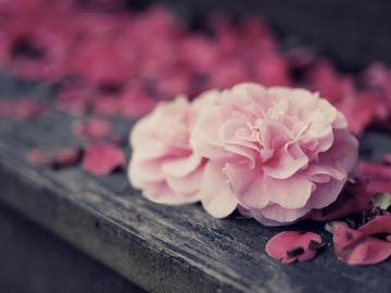 花开花落又一季的唯美句子