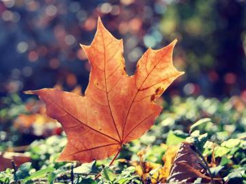 夏天就要结束,秋要来了的心情说说
