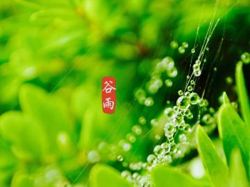 谷雨时节的温馨养生祝福语