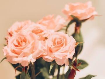让人觉得幸福的句子  在喜欢你的每一天里,被你喜欢