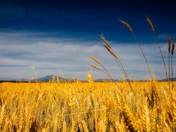 文艺美好的唯美句子:身边有微风,心中有暖阳