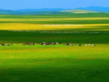 描写草原的诗句  春草年年绿,王孙归不归