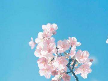 关于花的文案 :今生卖花,来世漂亮