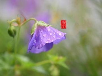 今天雨水的节日说说 雨水节气到,春天就来到