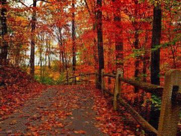 告别夏天,迎接秋天的唯美句子