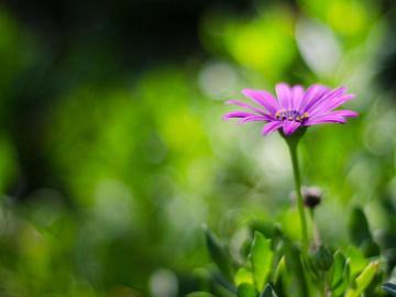 冬天的脚步已经渐渐远去,春风悄然而至的唯美说说