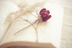 关于描写秋天枫叶的优美诗句古诗大全