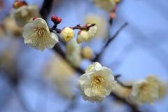 关于三月的诗句诗词2019 描写三月的古诗词大全