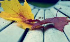 二十四节气关于秋分的说说大全 落叶知秋道一声朋友依旧