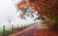 关于下雨天的唯美说说句子 描写下雨的优美句子